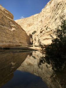 Eyn Avdat Canyon in the Negev Desert. Photo by Madison Doyle